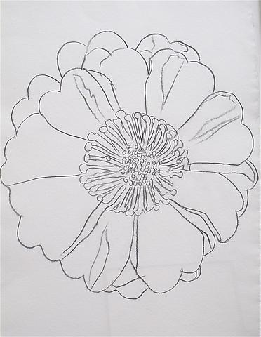 Flower, 1982 Graphite on HMP paper 31 1/2 x 23 1/4 inches