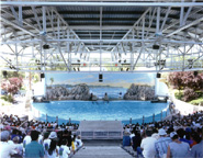 Doug Hall - Dolphin Pool, Marine World, California