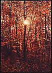 Cold Springs, Hudson River 2003 oil on linen 183 x 122 cm