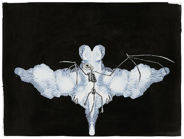 Tilda Lovell Transformation 2012 collage, white ink on paper 22 x 40 cm