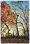 Twisting Trees 2007 oil on wood panel 91.5 x 61 cm