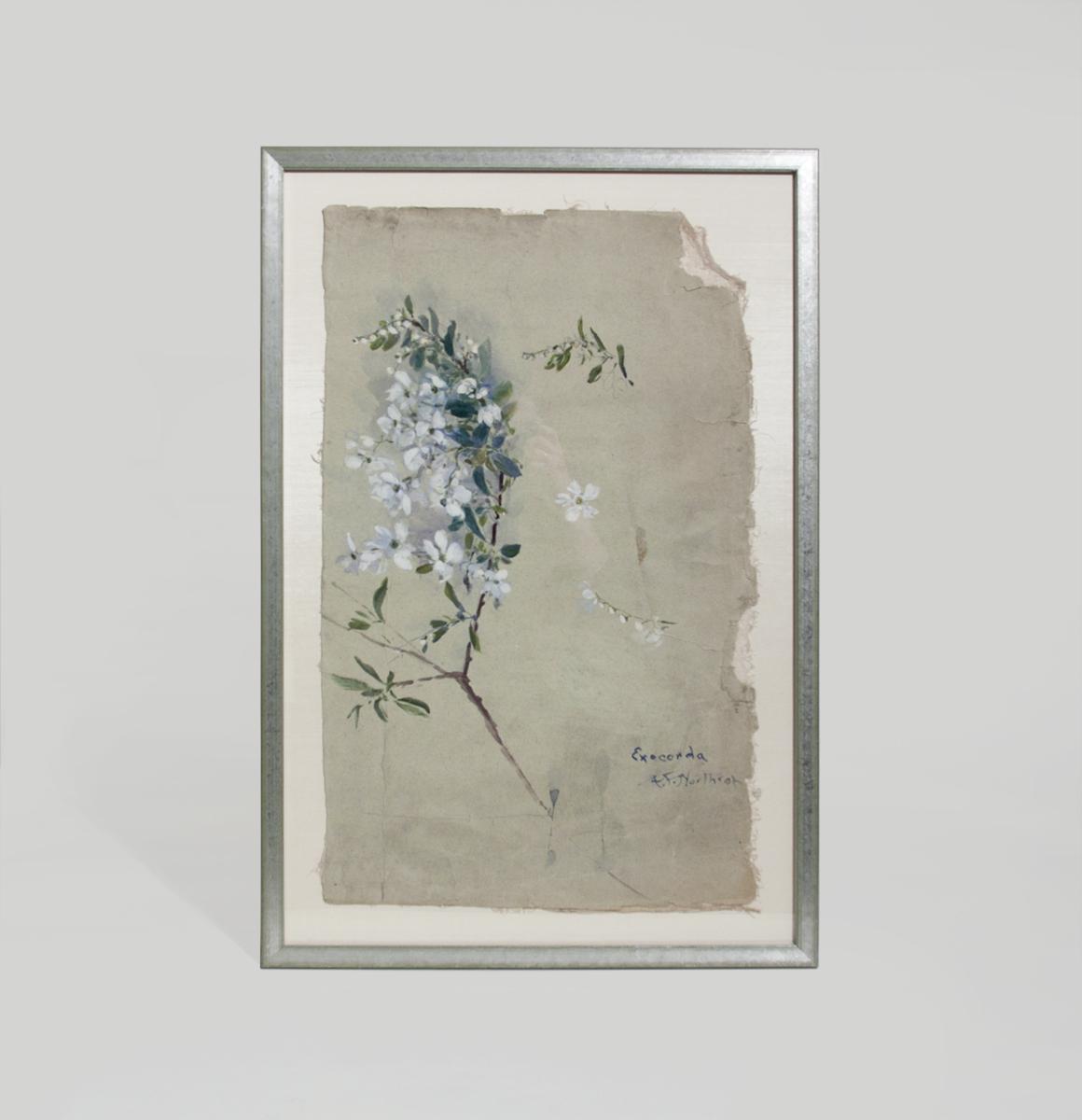 Agnes Northrop  Watercolor Study 1