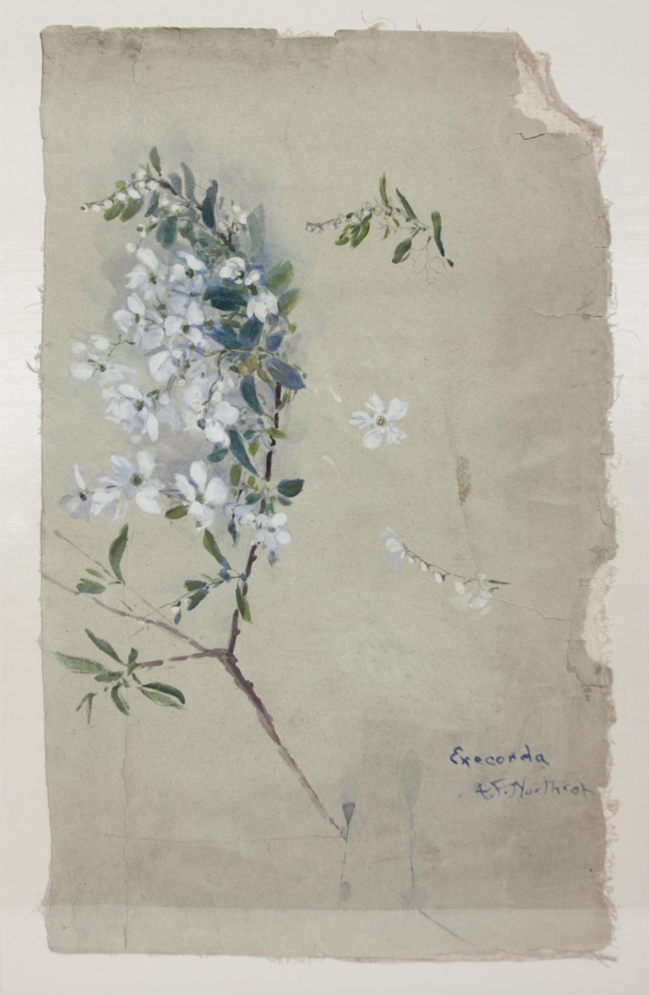 Agnes Northrop  Watercolor Study 2