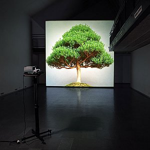 Ceal Floyer, <i>Overgrowth, </i>2004, Medium format slide and medium format slide projector, Dimensions variable