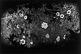 Daido Moriyama Nikko Toshogu, 1977 Vintage black and white print  7 11/16 x 11 3/5 inches C18670