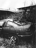 Daido Moriyama Hawaii, 2007/2010 Black and white photograph Unique  59 x 39 3/8 inches C18872