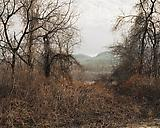Joel  Sternfeld
