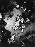 Daido Moriyama Hawaii, 2007 Black and white photograph Unique  59 x 39 3/8 inches C18861