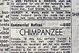 <i>New York Times classified advertisement, 1970s</i> 1970s Pigment print From an edition of 5 and 2 artist's proofs  Image size: 8 1/2 x 12 3/4 inches Frame size: 13 x 17 1/4 x 1 1/2 inches