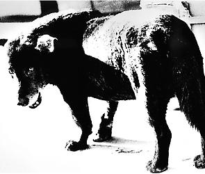 Daido Moriyama in <i>With a Trace: Photographs of Absence</i>