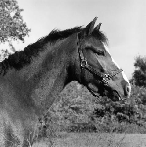 <i>Horse #6</i>, 1982