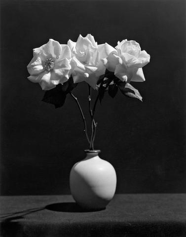 <i>Rose<i/>, 1983