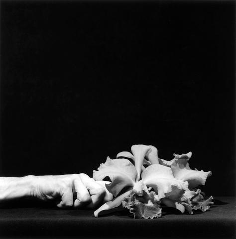 Orchid and Hand, 1983