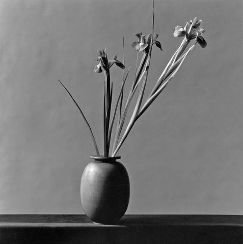 &lt;i&gt;Iris&lt;/i&gt;, 1982