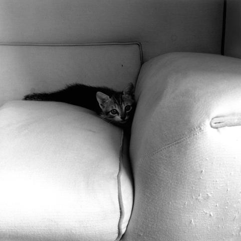 <i>Kitten</i>, 1983