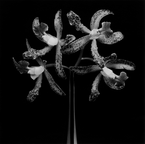 <i>Orchids</i>, 1983