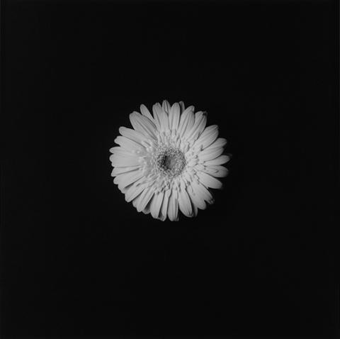 <i>Flower</i>, 1984