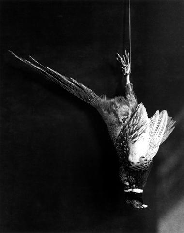 <i>Pheasant</i>, 1984
