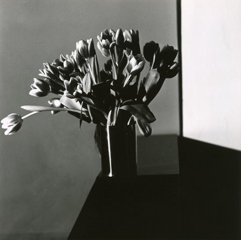 <i>Tulips<i/>, 1978