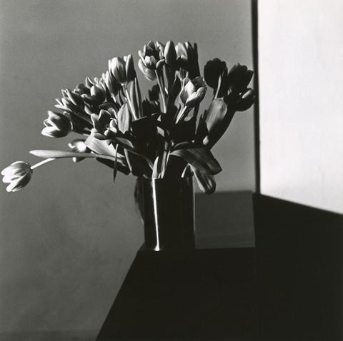 <i>Tulip</i>, 1977