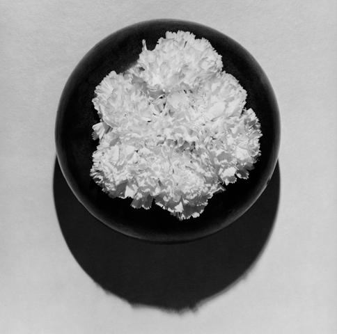 <i>Carnations</i>, 1978