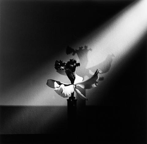 <i>Orchid</i>, 1977
