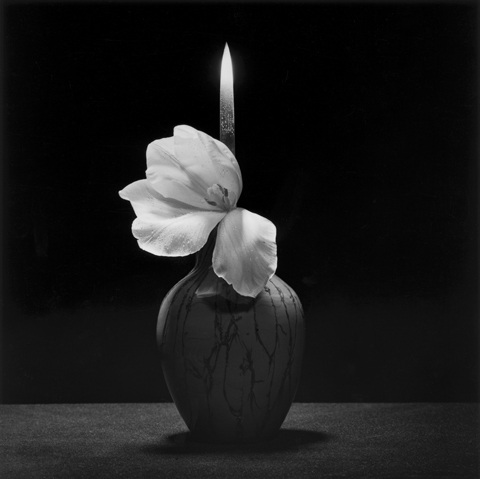 <i>Flower with Knife</i>, 1985