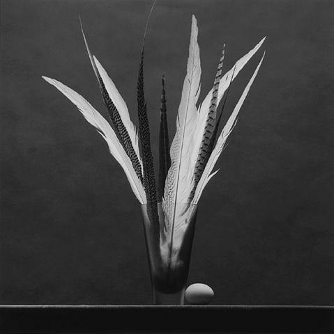 <i>Feathers / Egg</i>, 1985