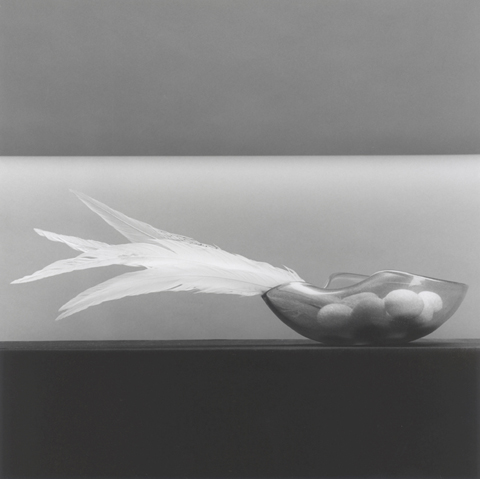 <i>Feather and Eggs</i>, 1985