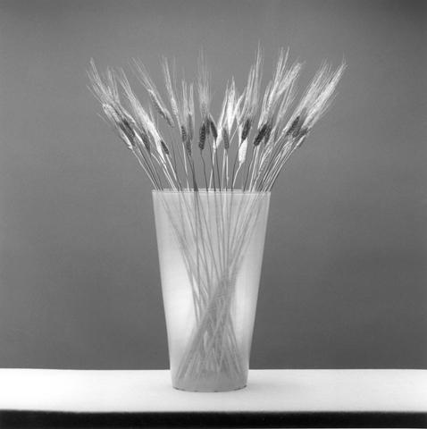 <i>Wheat</i>, 1985