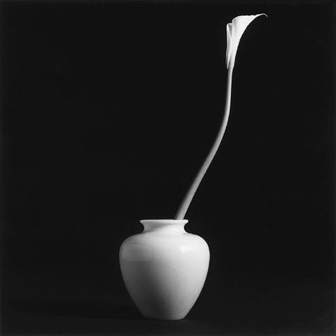 <i>Calla Lily</i>, 1985