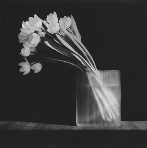 <i>Tulip<i/>, 1986
