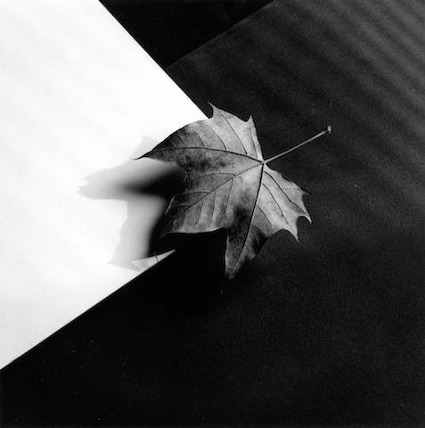 <i>Leaf<i>, 1986