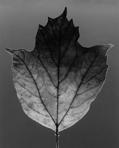 <i>Leaf</i>, 1987