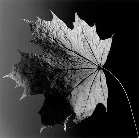 <i>Leaf<i/>, 1987