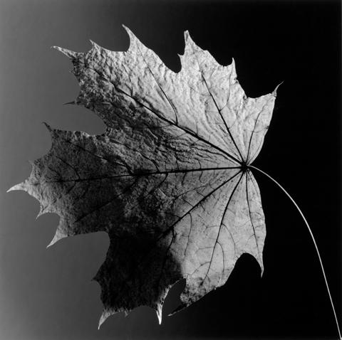 &lt;i&gt;Leaf&lt;/i&gt;, 1987