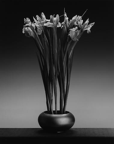 <i>Irises</i>, 1988