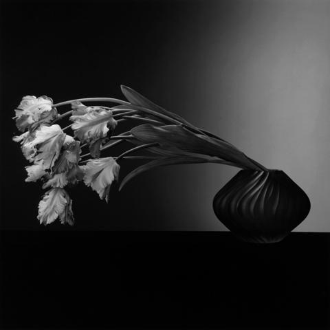 <i>Parrot Tulips</i>, 1988