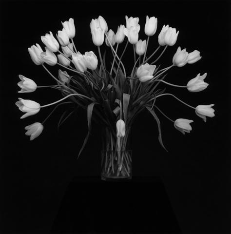<i>Tulips<i/>, 1988