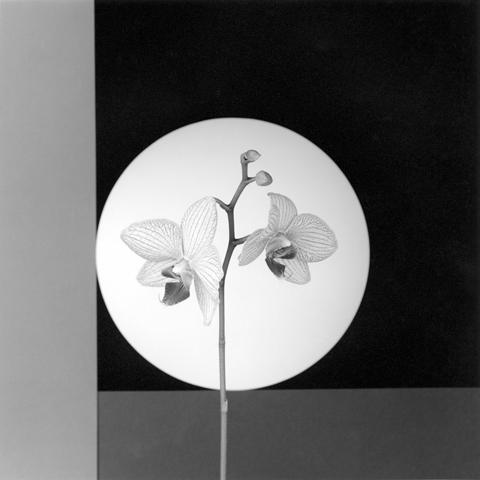 &lt;i&gt;Orchid&lt;/i&gt;, 1988
