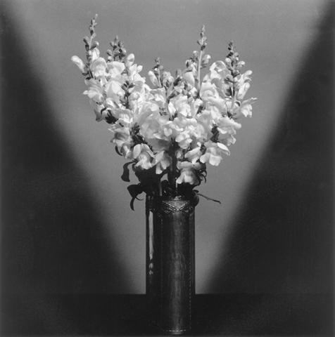 <i>Snap Dragons</i>, 1979