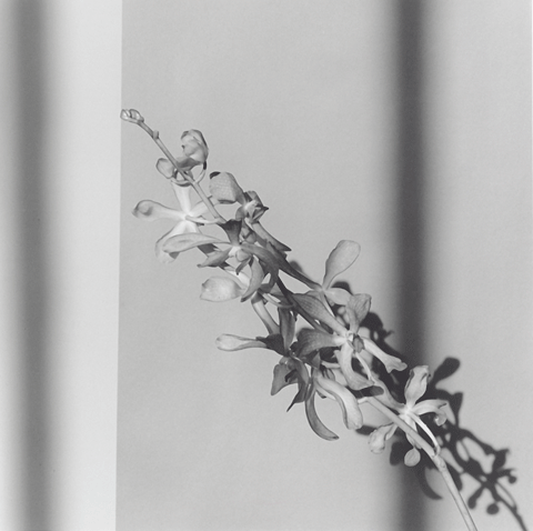 <i>Orchids</i>, 1980