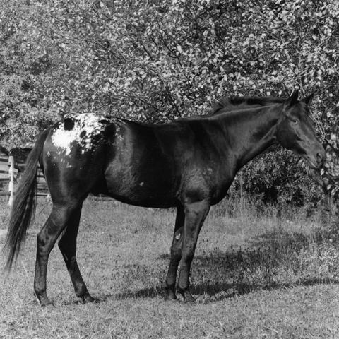 &lt;i&gt;Radar (Horse)&lt;/i&gt;, 1982