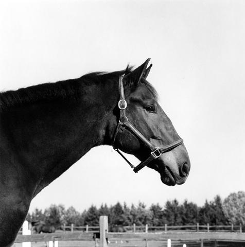 <i>Horse #2</i>, 1982