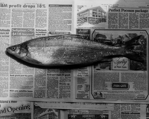 <i>Fish</i>, 1985