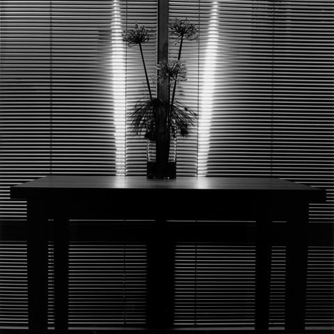 <i>Flower<i/>, 1980