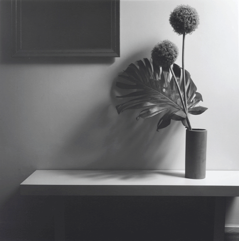 <i>Flower</i>, 1980