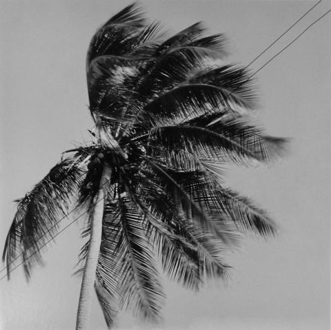 <i>Puerto Rico</i>, 1981