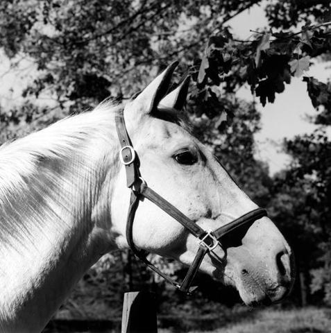 <i>Horse #3</i>, 1982