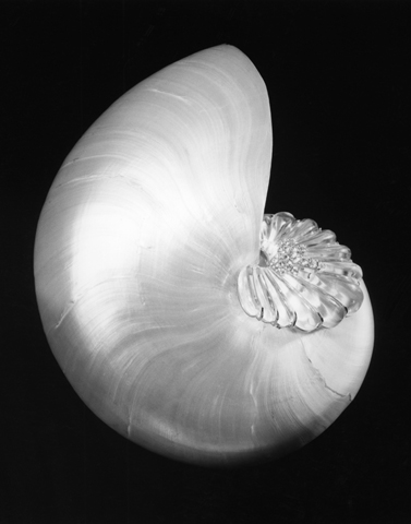<i>Shell and Crystal</i>, 1986